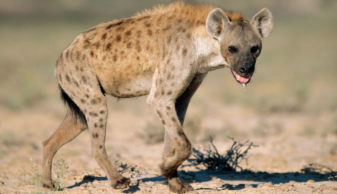 """MUROYI"" WHO SENDS HYENAS AND SNAKES TO RECOVER DEBT LANDS IN HOT SOUP"