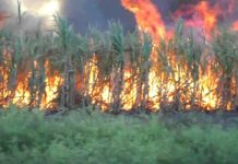 PUPIL BURNT TO DEATH IN SUGARCANE FIELD AFTER BEING CHASED AWAY BY PARENTS
