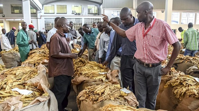 TOBACCO FARMERS GROSS OVER $500 MILLION