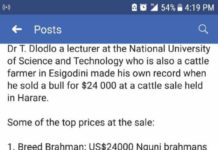 NUST Lecturer Pockets A Whooping $24k For Bull At Cattle Sale