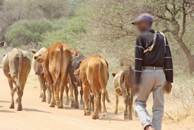 """""""Traditional healer said this would increase his herd of cattle"""""""