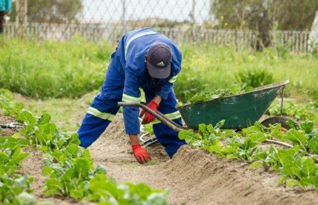 Gardener narrates how he got HIV from his Borrowdale boss lady as he was looking for extra school money
