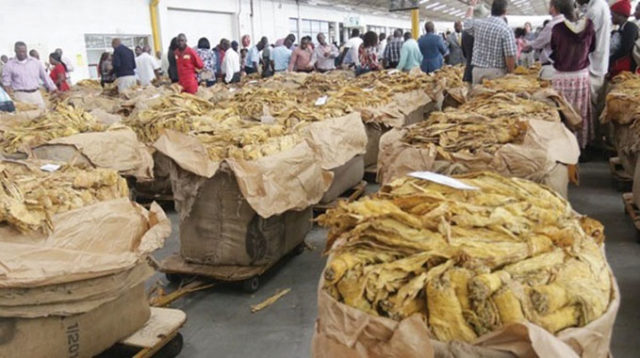 Tobacco farmers to receive prompt payments