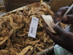 Opening Tobacco Bale Sold At US$4.30/kg